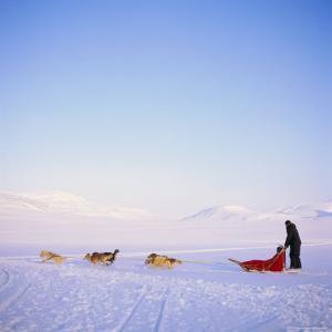 Husky Dog Sled Team, Spitsbergen, Norway, Europe by David Lomax