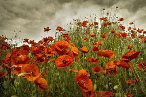 Bobbi's Poppies by David Lorenz Winston