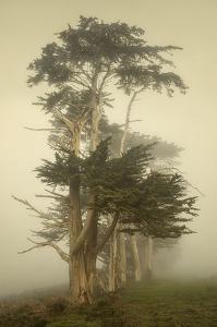 Cypress Symmetry by David Lorenz Winston