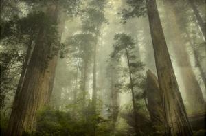 Damnation Trail by David Lorenz Winston