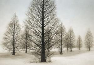 Dawn Redwoods by David Lorenz Winston