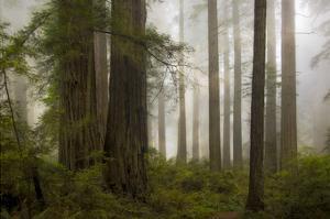 Del Norte Woods II by David Lorenz Winston