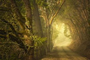 Dream's Journey by David Lorenz Winston