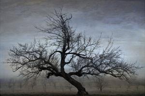 Farm House Tree by David Lorenz Winston