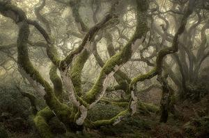 Flora's Poise Fog Play by David Lorenz Winston
