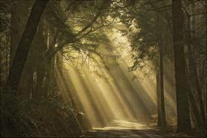 L'esprit du soleil by David Lorenz Winston