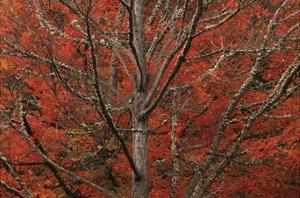Lithia Park in Fall by David Lorenz Winston