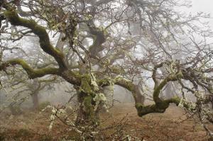 Mossy Oak by David Lorenz Winston