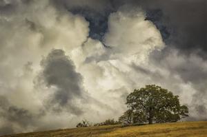 Oak's Embrace by David Lorenz Winston