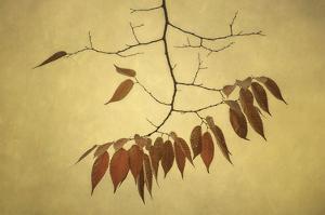 October Muse by David Lorenz Winston