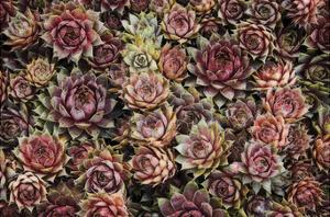 Succulents by David Lorenz Winston