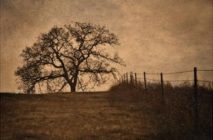Tree and Fence II by David Lorenz Winston
