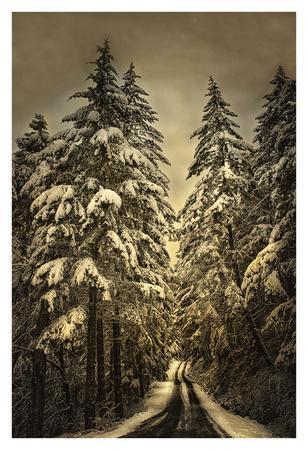 Wagner Creek Snow