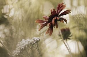 Whisper on the Wind by David Lorenz Winston