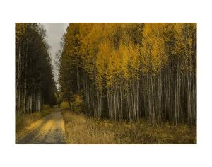 Wood River Aspens by David Lorenz Winston