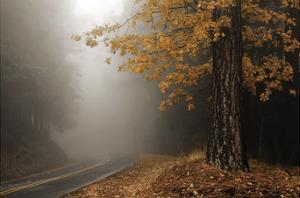 Yellow Leaves in Fog by David Lorenz Winston