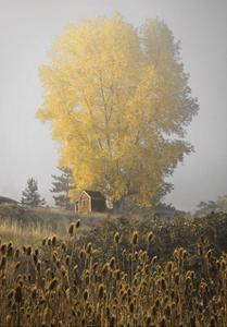 Yellow Tree & Teasel by David Lorenz Winston
