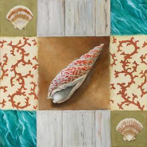 Shell Collage IV by David Marrocco