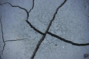 Fissures in the muddy bottom, early summer, close-up by David & Micha Sheldon
