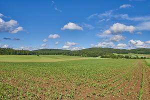 Scenery, corn field, Zea mays, field edge, heaven, blue, little cloud by David & Micha Sheldon