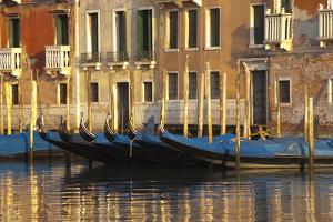 Gondolas Along the Grand Canal in Venice, Italy by David Noyes