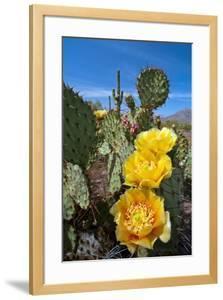 Prickly Pear Cactus Flowers by David Nunuk