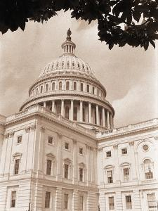 Branch Before U.S. Capitol by David Papazian