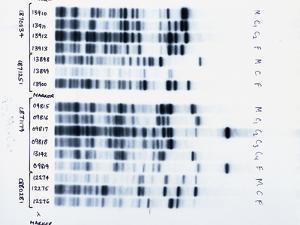 DNA Fingerprinting, Analysing Family Rela by David Parker