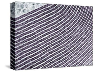 Golgi Apparatus Membranes