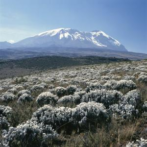 Mount Kilimanjaro, the Breach Wall, as Seen From Shira Plateau by David Pluth