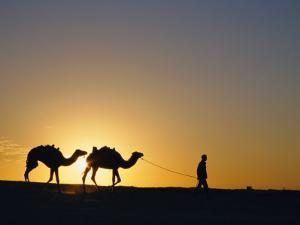 Camels and Guide, Zaafrane, Tunisia, North Africa by David Poole