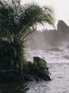 Chutes De La Lobe, Kribi, West Coast, Cameroon, Africa by David Poole