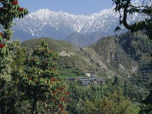 Gaddi Village, Dhaula Dhar Range, Western Himalayas, India, Asia by David Poole