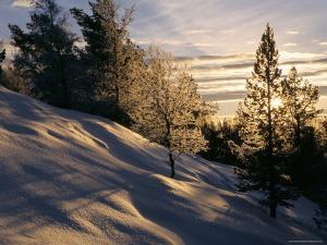 Sun Through Trees, Rondablikk, Norway, Scandinavia by David Poole