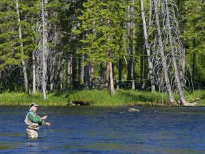 Fly Fishing the Madison River in Yellowstone National Park, Montana, Usa by David R^ Frazier
