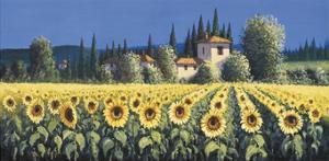 Summer Blooms by David Short