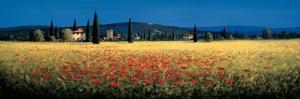 Tuscan Panorama, Poppies by David Short