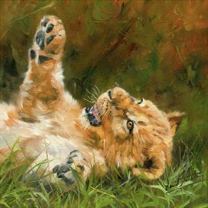 Lion Cub on Grass by David Stribbling