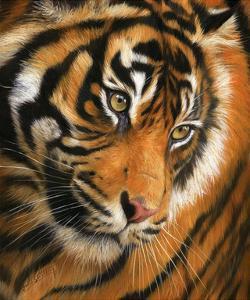 Tiger Face Portrait by David Stribbling