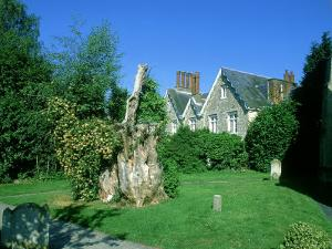 Remaining Stump from Gilbert Whites Famous Yew, Selborne Churchyard by David Tipling