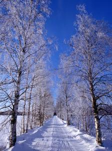 Snow on Country Road, Liminka, Finland by David Tipling
