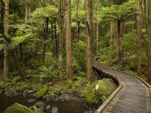 A.H. Reed Memorial Kauri Park, Whangarei, Northland, North Island, New Zealand by David Wall