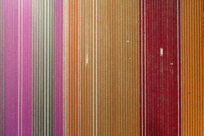 Aerial of workers in colorful tulip fields, Edendale, Southland, South Island, New Zealand.