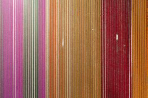Aerial of workers in colorful tulip fields, Edendale, Southland, South Island, New Zealand. by David Wall