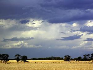 Approaching Storm, near Geelong, Victoria, Australia by David Wall