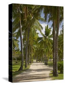 Avenue of Palms, Musket Cove Island Resort, Malolo Lailai Island, Mamanuca Islands, Fiji by David Wall
