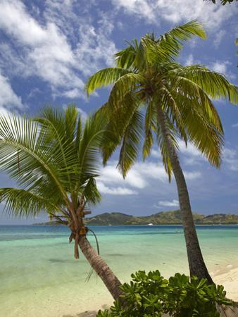 Beach and Palm Trees, Plantation Island Resort, Malolo Lailai Island, Mamanuca Islands, Fiji by David Wall