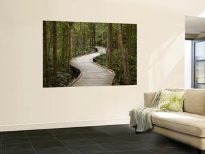 Boardwalk To Nelson Falls, Franklin - Gordon Wild Rivers National Park, Western Tasmania, Australia by David Wall