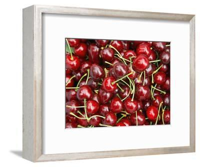 Cherries, Ripponvale, near Cromwell, Central Otago, South Island, New Zealand