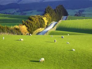 Farmland, South Otago, South Island, New Zealand by David Wall